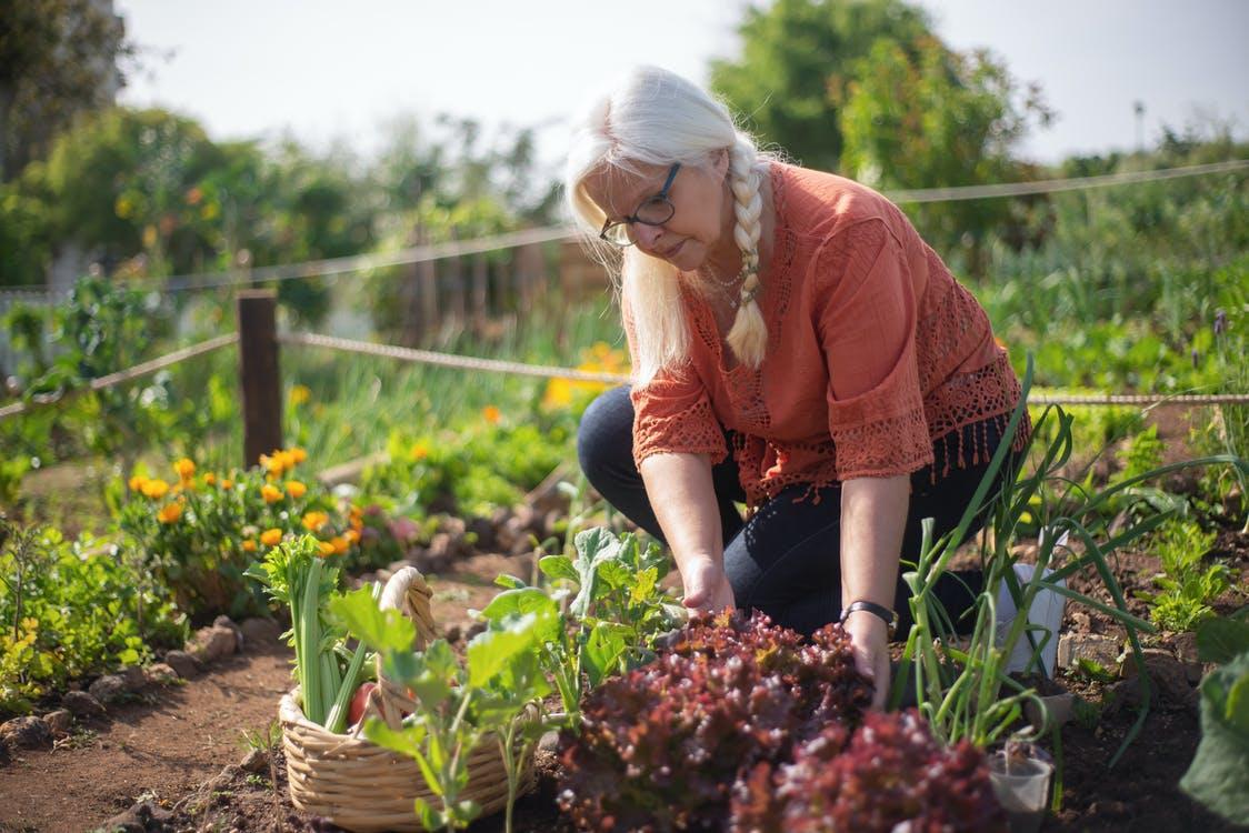 Interviu GrădinaMax: ce preferă românii să cultive în grădina casei